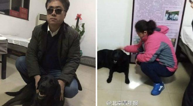 Chú chó bị trộm được trả lại và thông điệp về lương tâm con người.3
