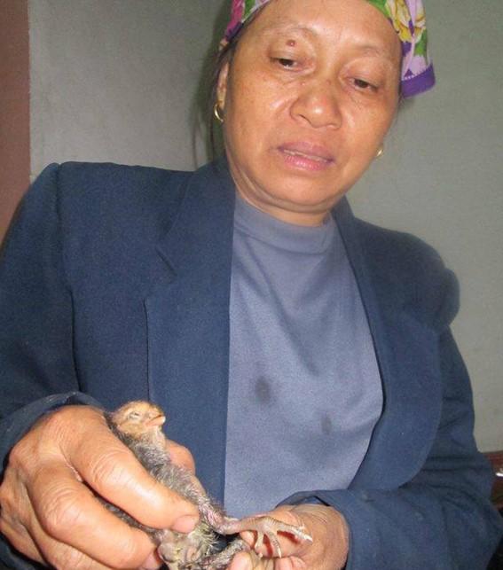 Chuyện lạ, những chú gà 4 chân trên khắp đất nước Việt Nam - H2