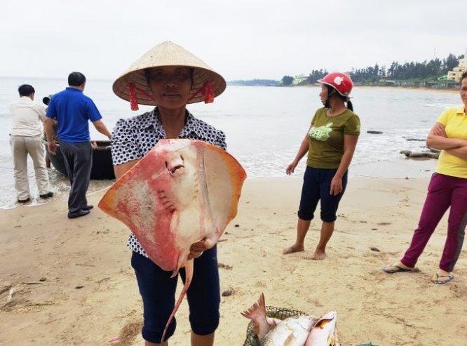 """Sau Hà Tĩnh, Quảng Bình, cá lại """"chết bất thường"""" tại biển Quảng Trị.2"""