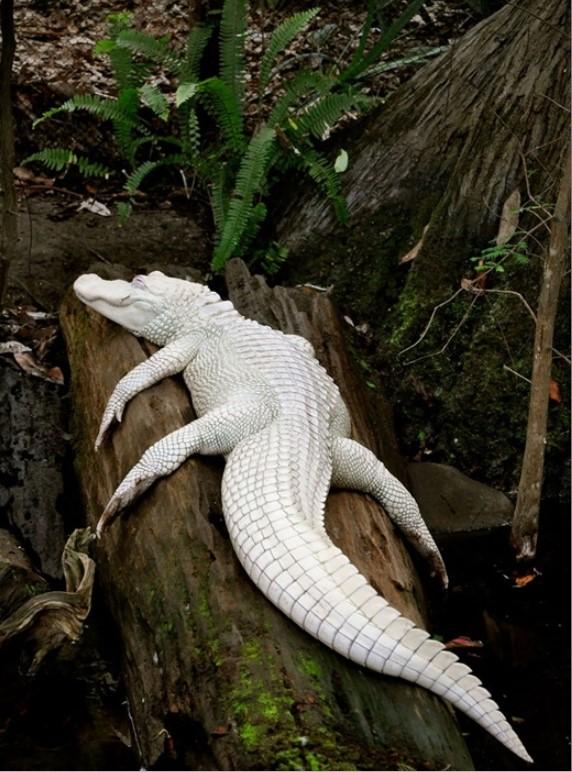 Ấn tượng trước những động vật bị bạch tạng đẹp như trong truyền thuyết.1
