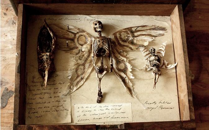 Chàng trai chia sẻ bộ sưu tập xác tiên, người sói được tìm thấy ở Anh. 2