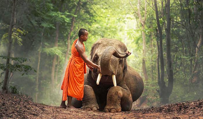 Lạc đường trên núi, vị tăng nhân giật mình chứng kiến Phật Pháp uy nghiêm, báo ứng vô tình.