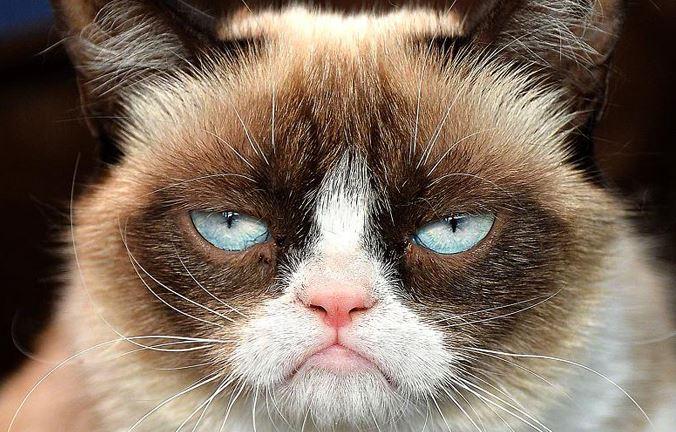 Mơ thấy mèo nói lên tính cách cá nhân