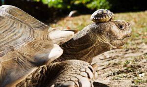 Rùa và cua cùng bị nhốt trong chiếc giỏ tre, nhưng tại sao chỉ rùa chui ra được?