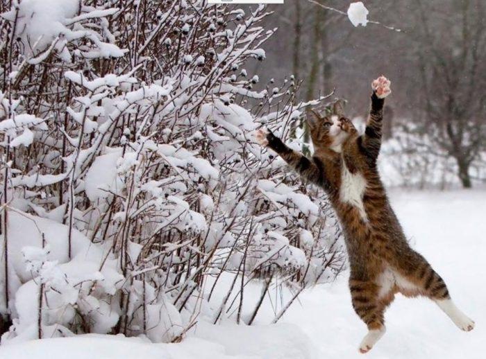 động vật nô đùa trong tuyết