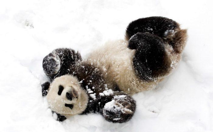 động vật nô đùa trong tuyết.2