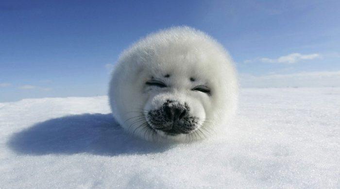 động vật nô đùa trong tuyết.9