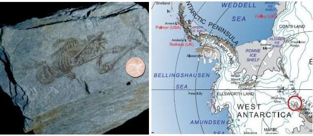 Hóa thạch người tí hon 600 triệu năm tuổi ở Nam Cực: Là ai và từ đâu đến? - ảnh 3