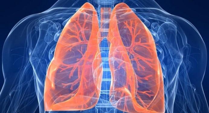 Phát hiện y học mới: Phổi hóa ra là cơ quan tạo máu!.1