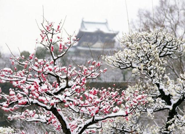 Bậc quân tử như hoa mai trong tuyết lạnh, như tùng bách xanh tốt quanh năm - ảnh 1