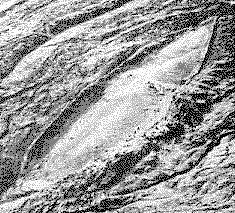 Bí ẩn Đại Hồng Thủy: Video bị che giấu tiết lộ những gì được tìm thấy trong con tàu Noah - ảnh 2