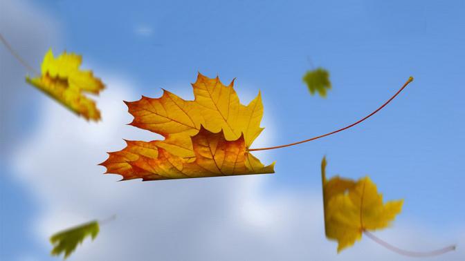 Lá lìa cành vì lá không biết quý trọng, hay là do cơn gió vô tình? - ảnh 2