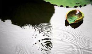 Lời Phật dạy: Khát nước 3 ngày, cũng chỉ lấy 1 hồ lô