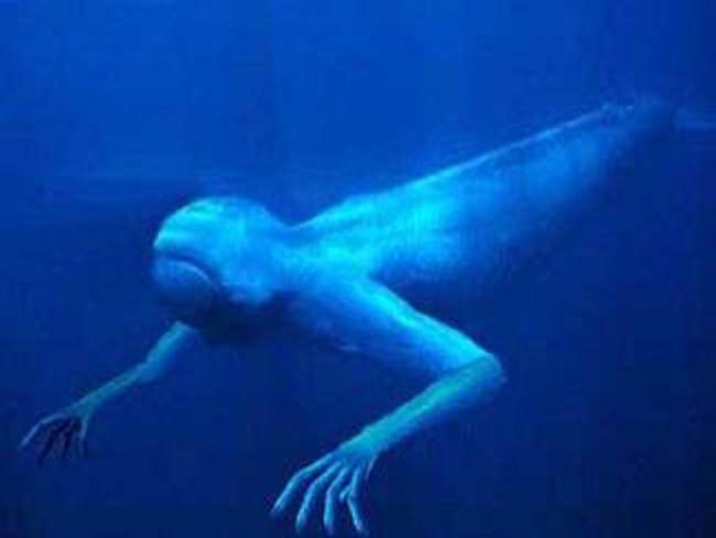 Bí ẩn chưa có lời giải về quái vật biển khổng lồ hình người ở Nam Cực - ảnh 3