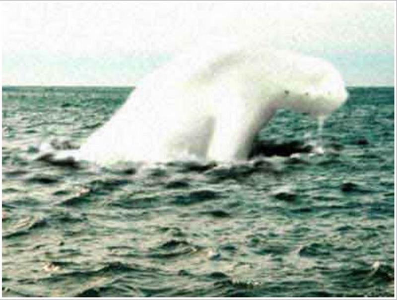 Bí ẩn chưa có lời giải về quái vật biển khổng lồ hình người ở Nam Cực - ảnh 2