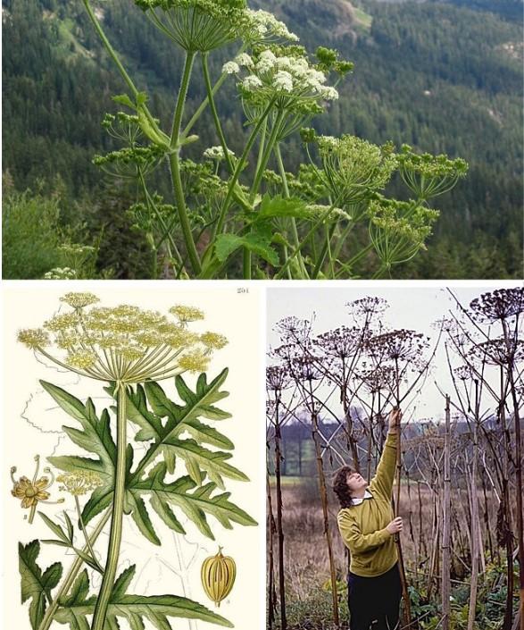 9 loài cây đẹp nhưng độc không tưởng, đừng dại động vào - H7
