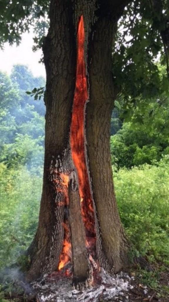 Thân cây rực lửa từ bên trong, ngỡ như lối vào cổng địa ngục - ảnh 5