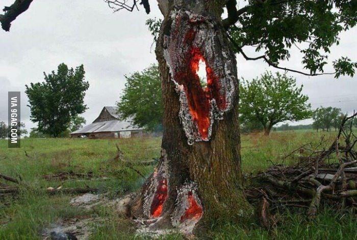Thân cây rực lửa từ bên trong, ngỡ như lối vào cổng địa ngục - ảnh 6