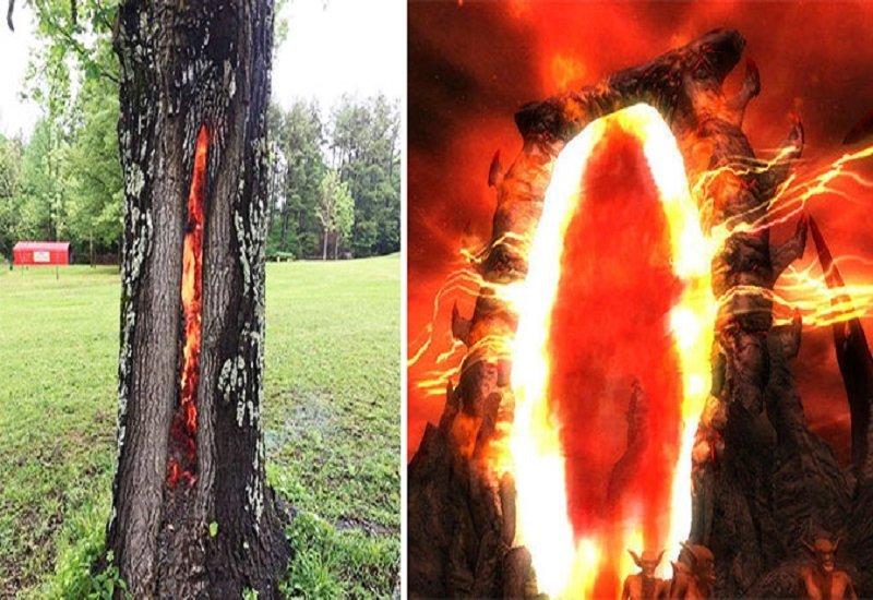 Thân cây rực lửa từ bên trong, ngỡ như lối vào cổng địa ngục - ảnh 1