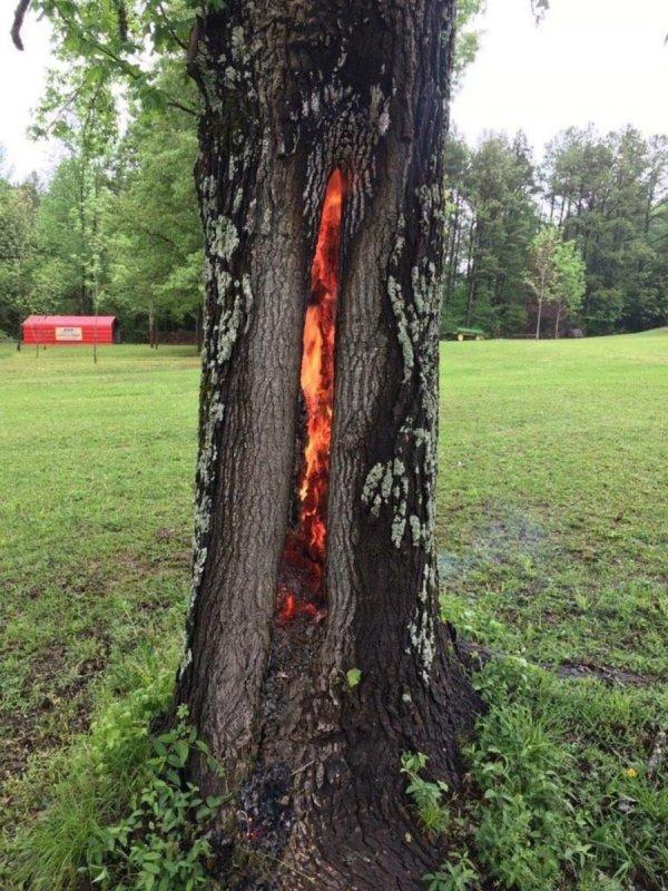 Thân cây rực lửa từ bên trong, ngỡ như lối vào cổng địa ngục - ảnh 2