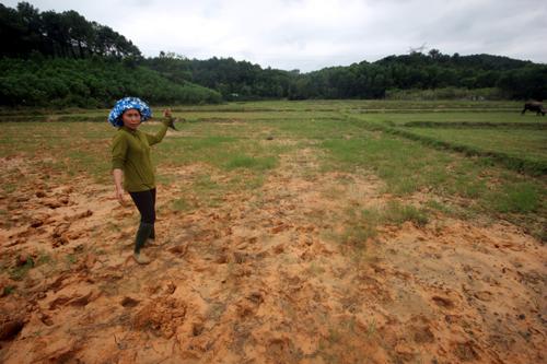 Quảng Nam: Dân dựng lều phản đối thi công dự án nước sạch nghìn tỷ - H1