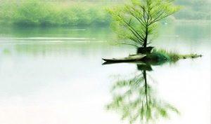 Khó khăn giúp ta thêm vững bước, bần hàn khiến ta biết kiên cường