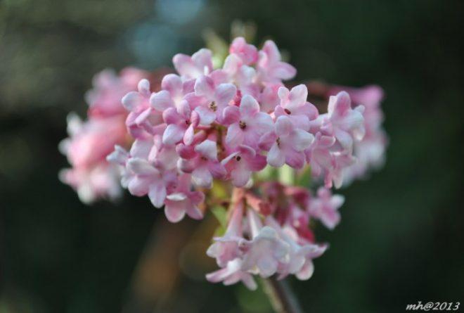Mùa Xuân cẩn thận tránh chưng những cây hoa gây độc.16