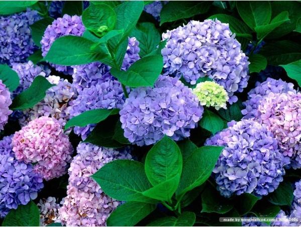 Mùa Xuân cẩn thận tránh chưng những cây hoa gây độc.5