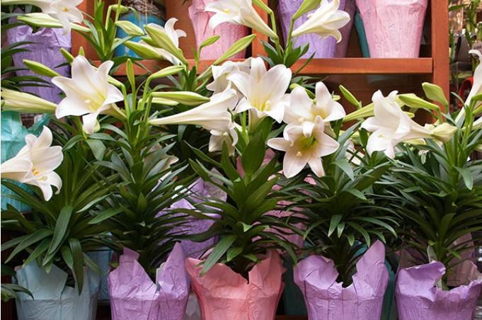 Mùa Xuân cẩn thận tránh chưng những cây hoa gây độc.3