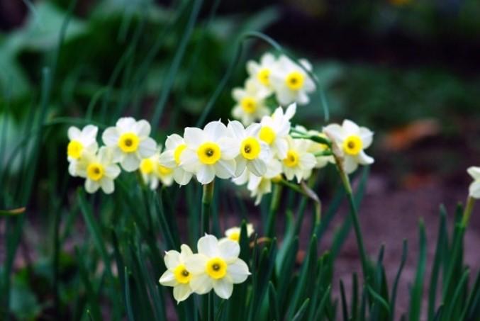 Mùa Xuân cẩn thận tránh chưng những cây hoa gây độc.6