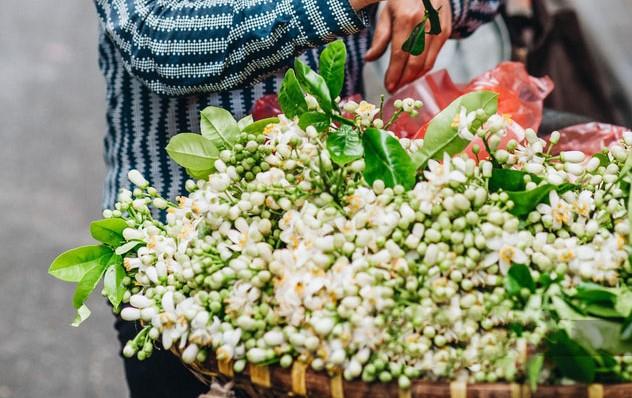 Hà Nội đón chờ tháng 3 với hương hoa bưởi thơm ngát.1