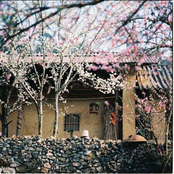 Khung cảnh tuyệt đẹp của mùa xuân tại cao nguyên đá Hà Giang. 11