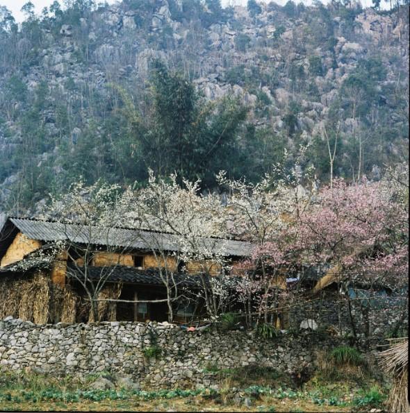 Khung cảnh tuyệt đẹp của mùa xuân tại cao nguyên đá Hà Giang.20