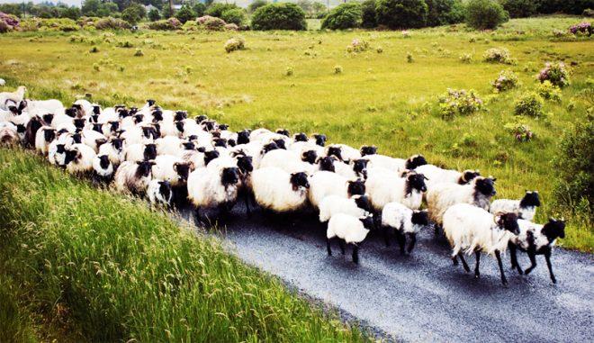 Lựa chọn cuộc sống: Bạn là người có chính kiến hay mãi chạy theo đám đông?. 1