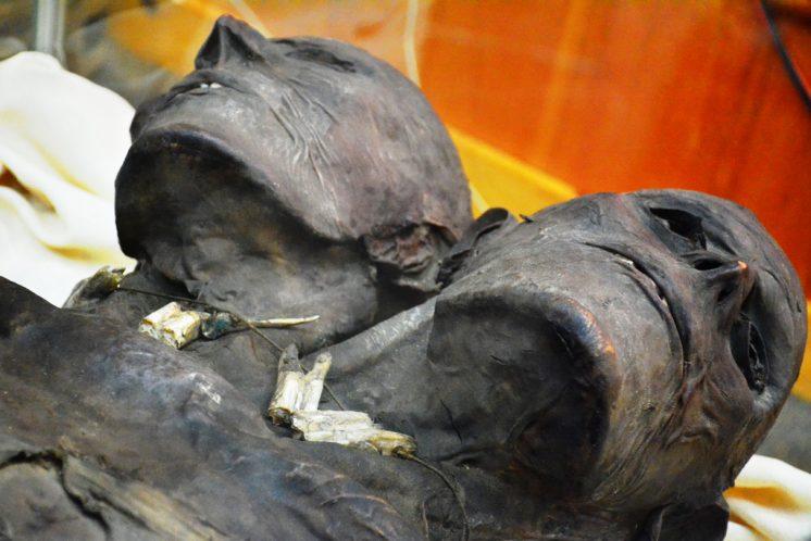 Kap Dwa là một trường hợp người khổng lồ hiếm gặp với 2 đầu và có chiều cao 3,5 m. (Ảnh: Viva Forum)