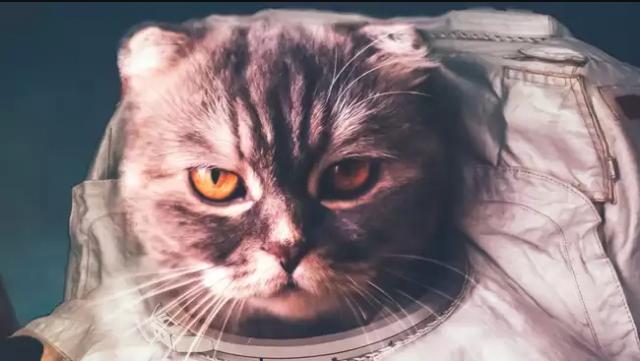 Cô mèo sống sót đầu tiên sau du hành vũ trụ cùng số phận bi thảm.1