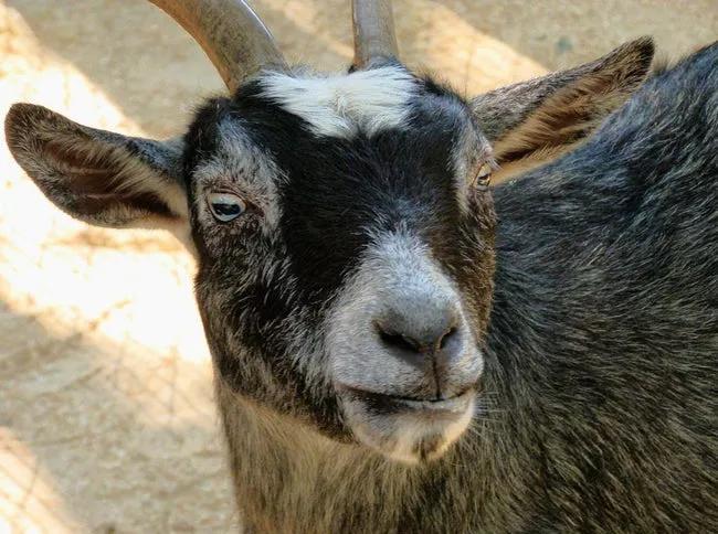 Danh sách 12 động vật bị bắt giam vì nghi ngờ phạm tội gây bất ngờ. 5
