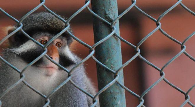 Danh sách 12 động vật bị bắt giam vì nghi ngờ phạm tội gây bất ngờ. 1