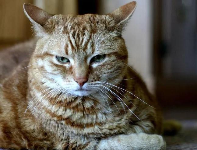 Chú mèo bị bắt giữ vì tính khí ngang tàn.