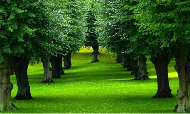 Cây cối có nhiều điều để dạy chúng ta... h1
