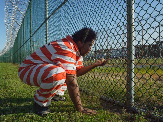 Thiên nhiên kỳ diệu: Vườn tù Rikers Island làm thay đổi nhiều phạm nhân. 3