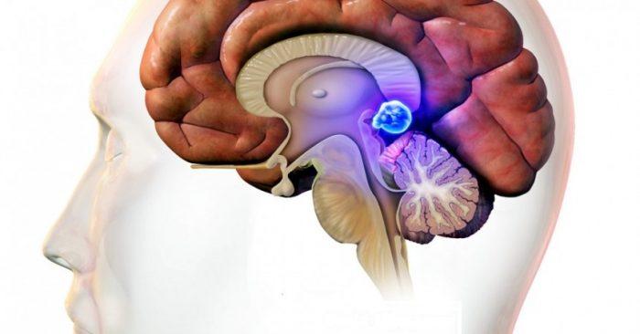 Đại não và linh hồn: Cuộc đối thoại giữa hữu hình và vô hình - ảnh 4