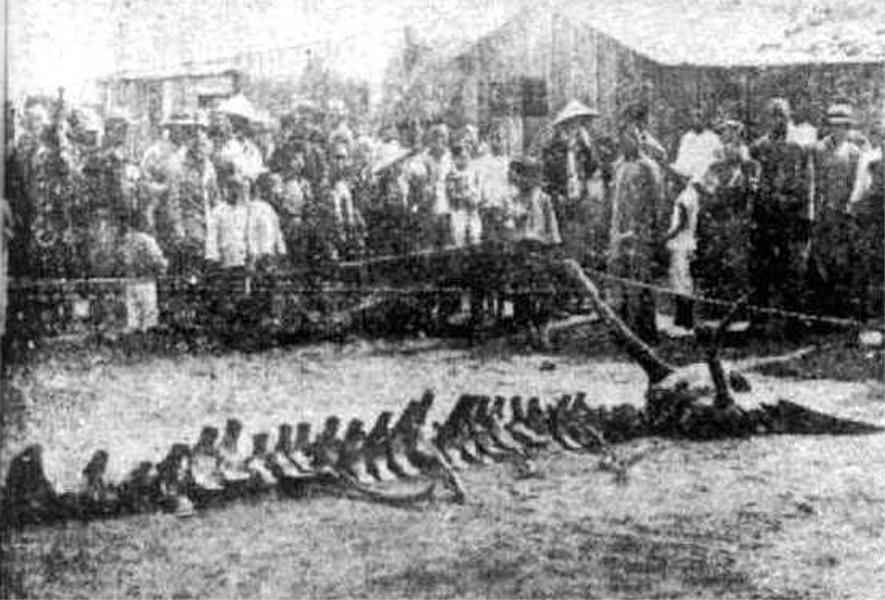 Sự thật việc chân long giáng thế ở Liêu Ninh năm 1934 - ảnh 3