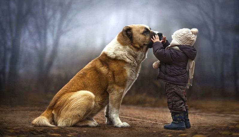 Thân người khó được: Con người và động vật luân hồi qua lại - ảnh 1