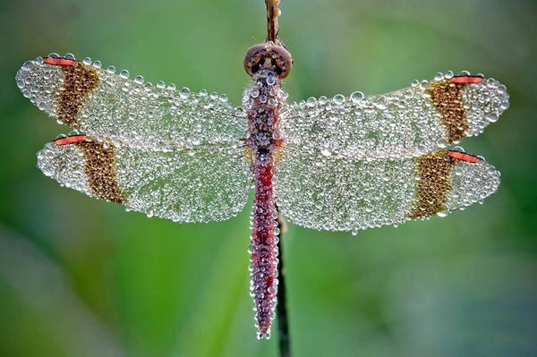 Khám phá ý nghĩa biểu tượng của chuồn chuồn trên khắp thế giới - H09