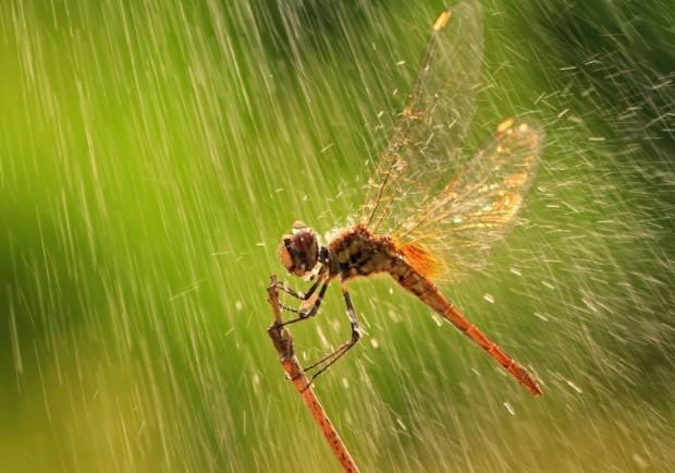 Khám phá ý nghĩa biểu tượng của chuồn chuồn trên khắp thế giới - H6