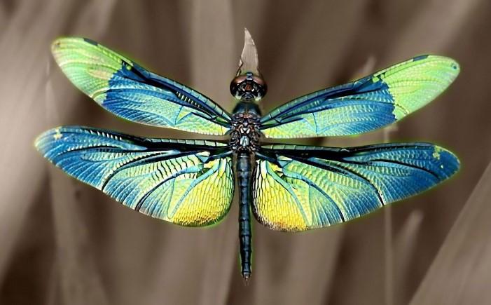 Màu sắc đẹp mắt của cánh chuồn chuồn