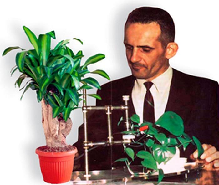 Grover Cleveland Backster Jr. đang thí nghiệm máy dò nói dối trên thực vật. (Ảnh qua New York Times)