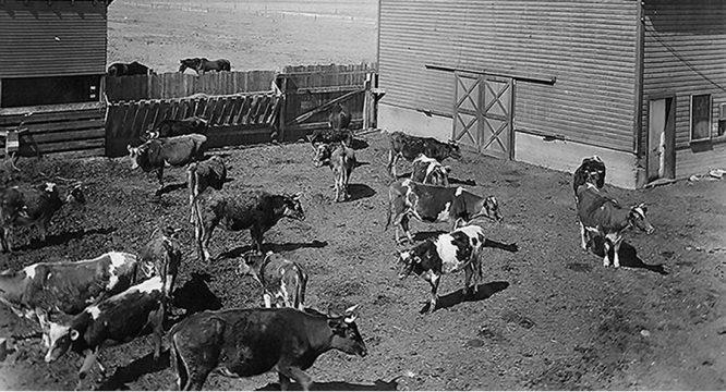 Hơn 100 năm trước, người Mỹ thực hiện an toàn thực phẩm thế nào? - H2