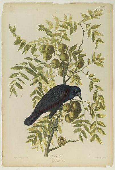 Loài quạ ngày Thất Tịch qua các tác phẩm hội họa thế giới. Ảnh 4